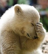 facepalm-bear3.jpg