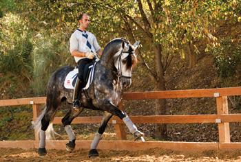 venta caballos madrid: