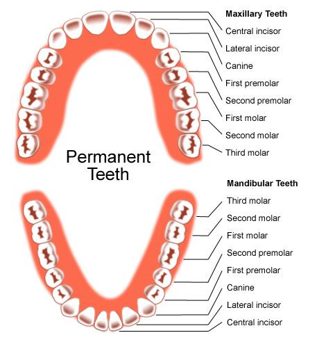 Dentistry best science major