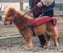 Trained Emotional Support Dog For Sale