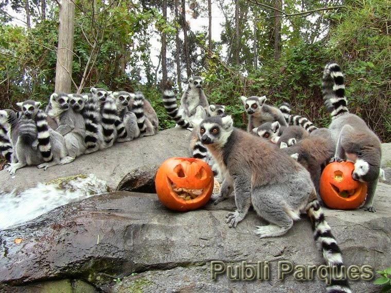 Halloween de Faunia 2014