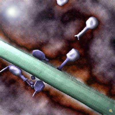 virus fago T4