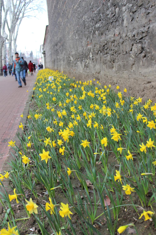 Çiçekler açtı.Bahar geldi
