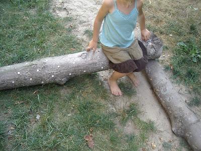 http://4.bp.blogspot.com/-A6_dIYeDKMs/UAyeJHGWugI/AAAAAAAAET0/3CtlYdsq7fk/s400/shiitake+mushroom+logs+july+22+013.jpg