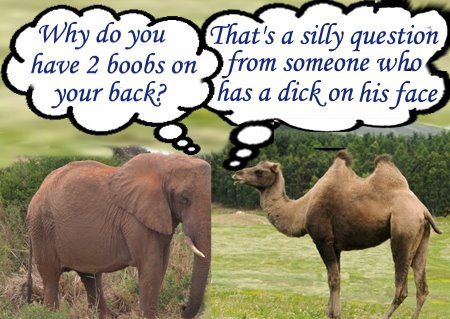 Elephant vs Camel