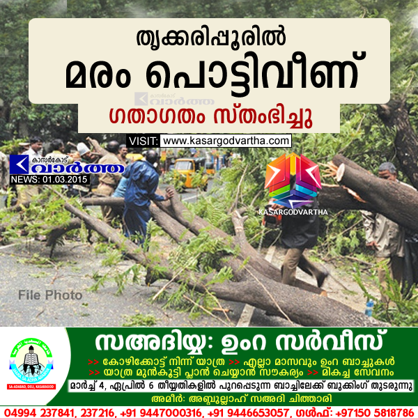 Trikaripur, kasaragod, Kerala, fire force, Tree,