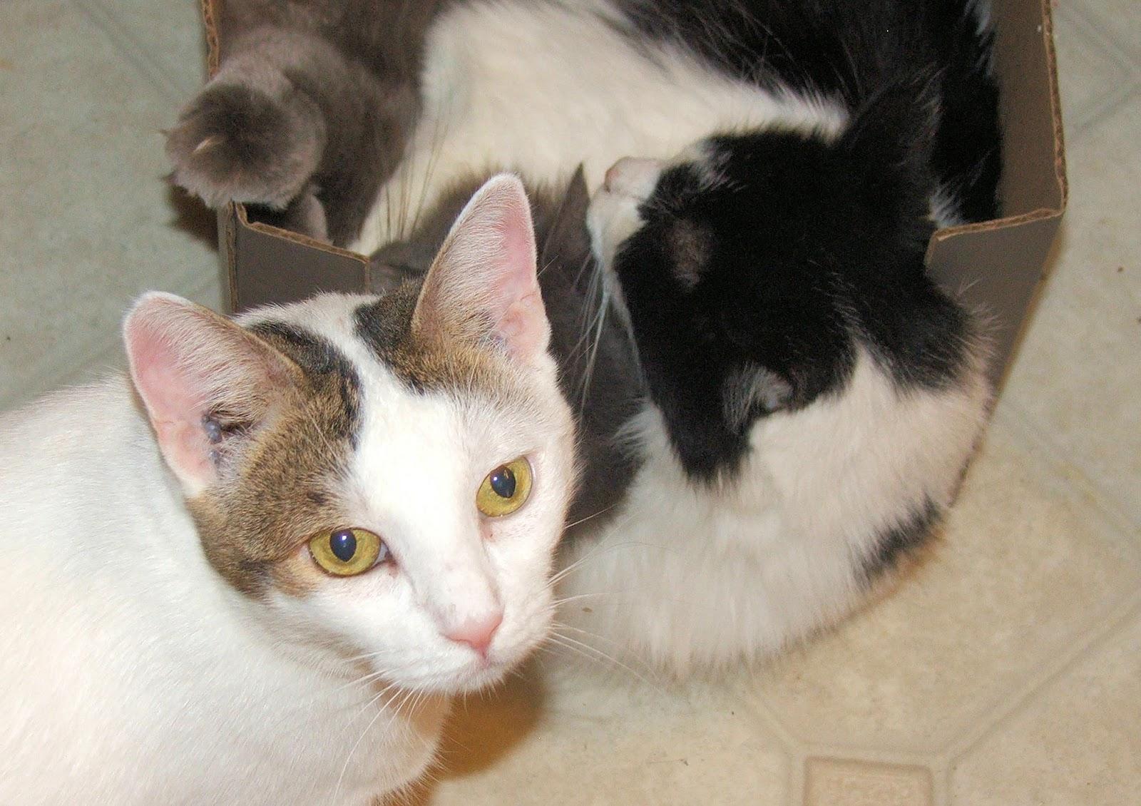А вы знали про вкус у кошек? Интересные факты о кошках