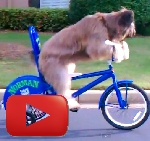 Perro subido en bicicleta