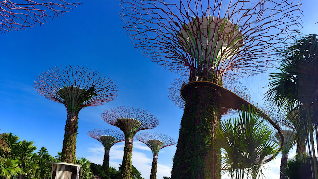 gardens by the bay singapore Supertree Grove