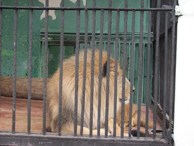 смотреть король лев