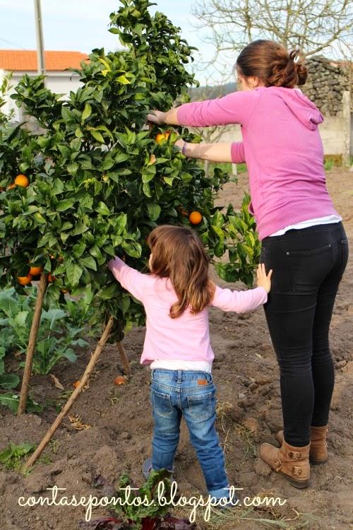 Laranjas do quintal - bolo de laranja