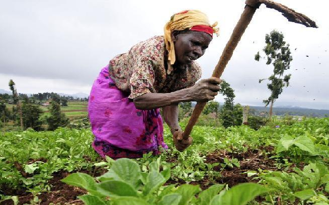 Une Perspective pour l'Agriculture  en milieu Rurale
