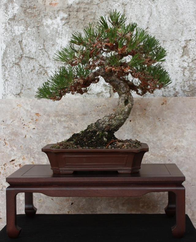 El taller del bons i un nuevo blog de mesas para bonsais - Mesas para bonsai ...