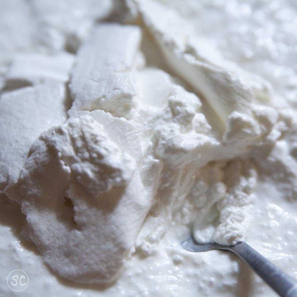 Un regard sur le monde la saga du k fir de lait partie for Plante kefir