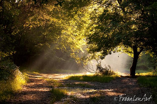 Fotografia - raggi di sole sul sentiero
