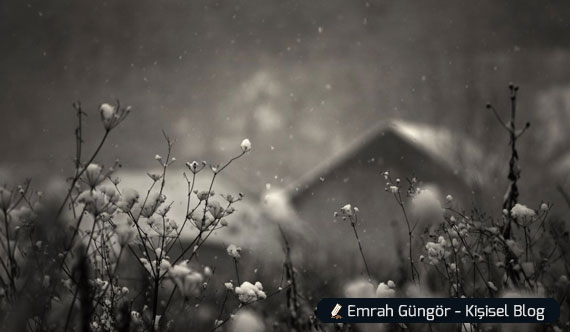 üzerine kar yağmış ot, kış
