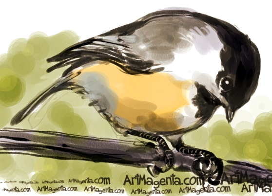 Black-capped Chickadee sketch painting. Bird art drawing by illustrator Artmagenta