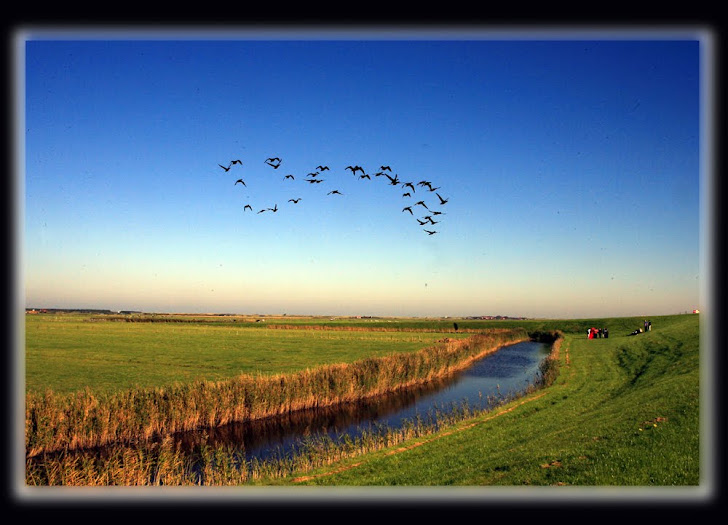 Ameland