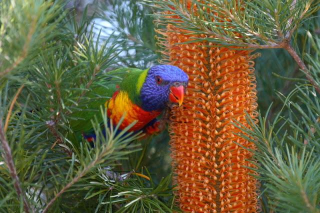 Banyak Aneh Unik: Gambar Foto Burung Paling Indah Unik