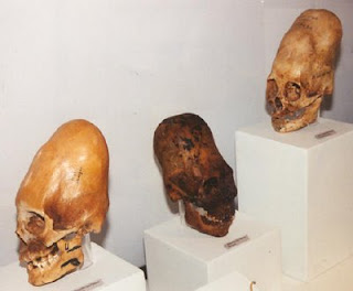 Datos sobre los Annunakis Cranios