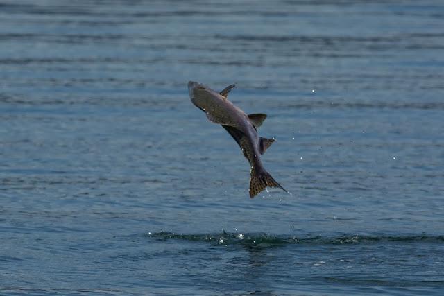 http://www.nor-fishing.no/en/