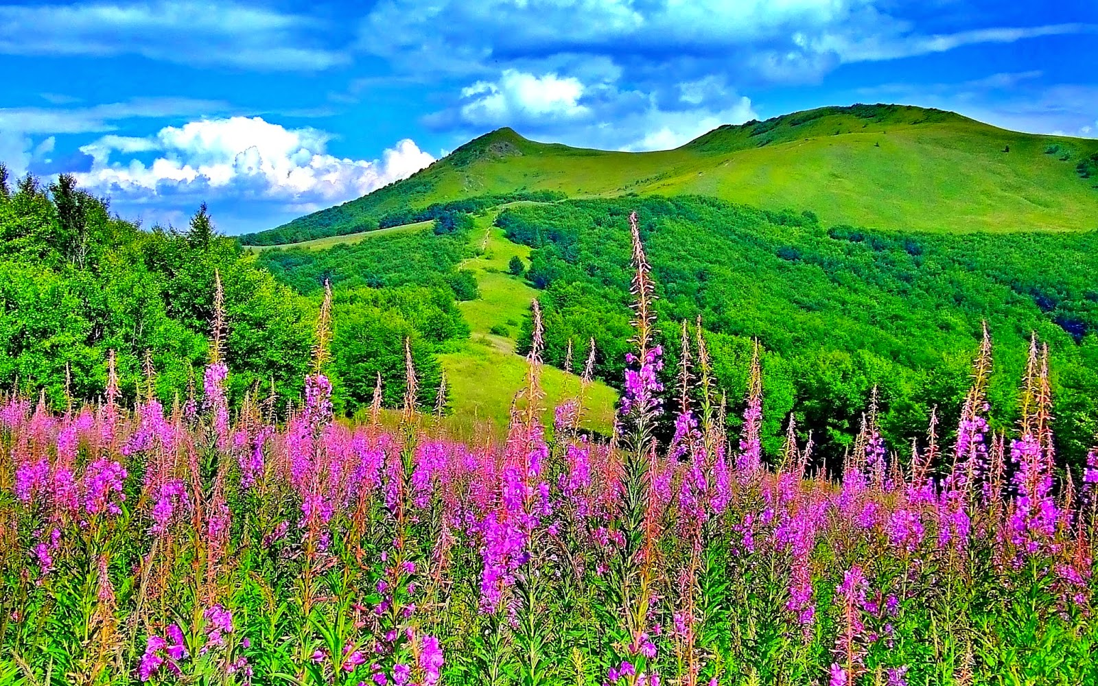 Good Wallpaper High Quality Scenery - 2018828%2BLovely%2BSpring%2BLandscape%2BHD%2BWallpaperz%2B189892  You Should Have_217844.jpg