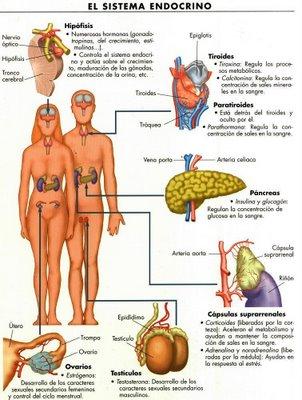 valor normal hormona tiroideas sangre:
