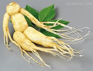 Panax ginseng is suitable for those who want to be healthy and want to supplement the body
