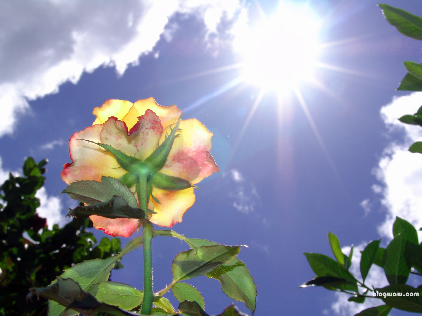 rosas no jardim poema:rosa encarou o sol que girou em volta dela a rosa confrontou o sol