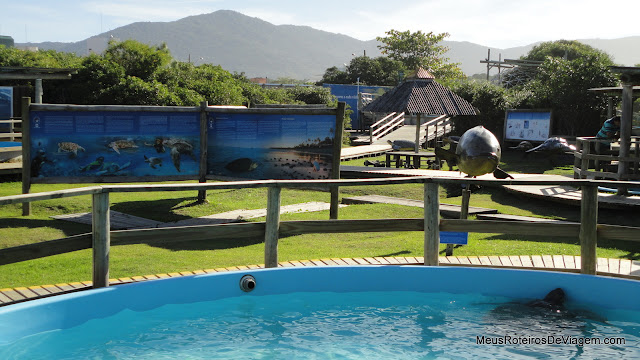 Projeto Tamar Florianópolis - Barra da Lagoa