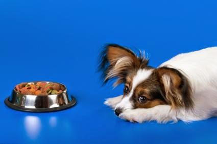 Chứng biếng ăn trên chó.