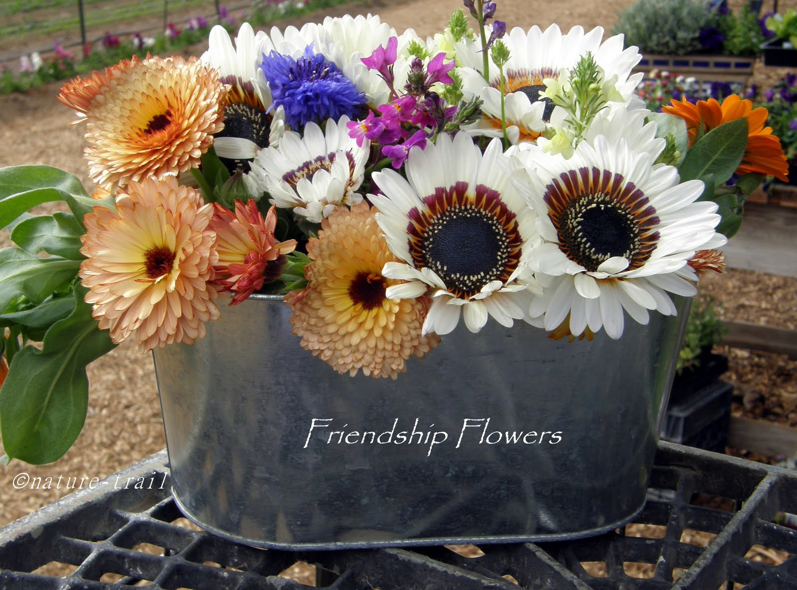 Nature trail friendship flowers - Flowers that mean friendship ...