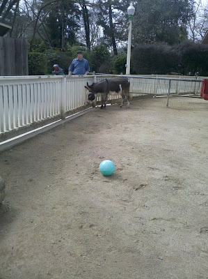 John and the donkey, ignoring the blue ball that has been rolled over to them