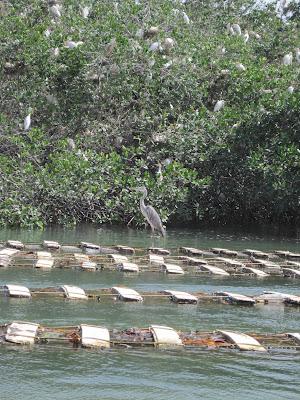 Embarcadero en La Somone