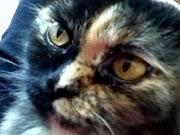 Cat Face cat face