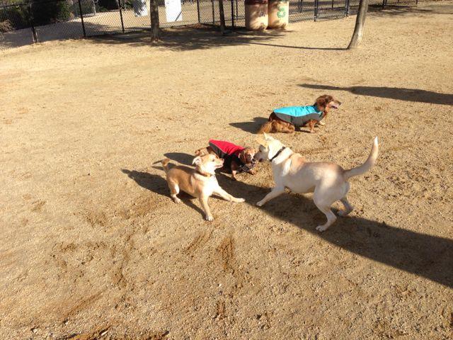 Dog Agility Training San Ramon
