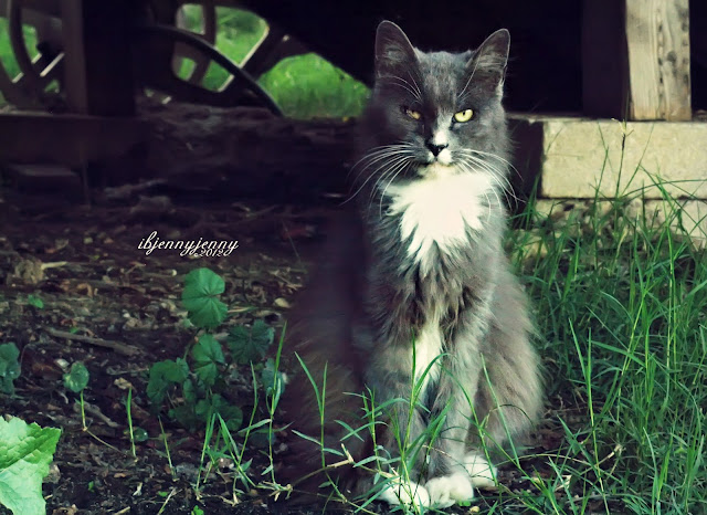 grey and White stray Cat