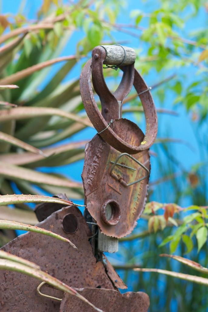 Driftwood Ramblings: Henk Scholtz's Franschhoek Garden