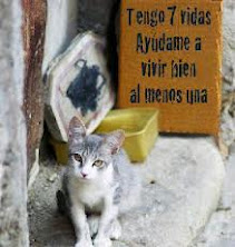 MADRID FELINA