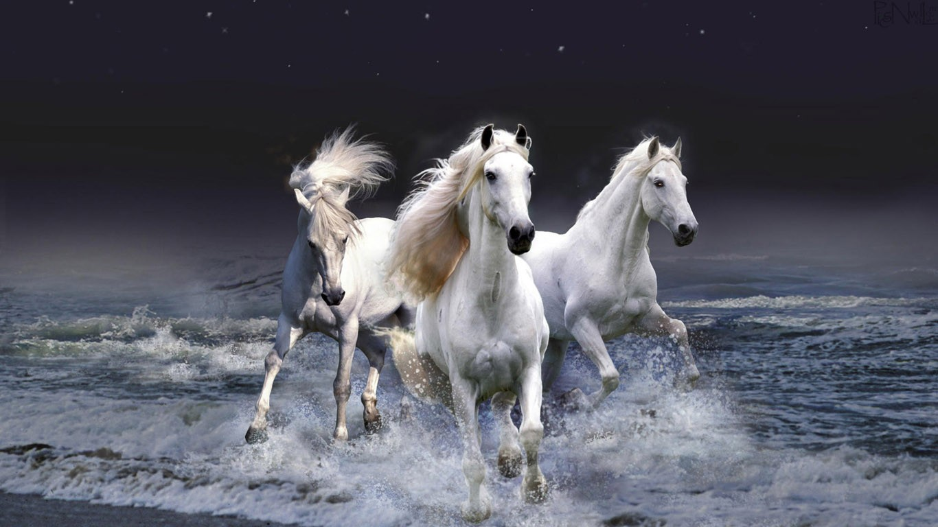Cool   Wallpaper Horse Nature - Top-Class-Horses-HD-Wallpapers-for-Riders-%5B1366x768%5D-(5)  Pic_71233.jpg