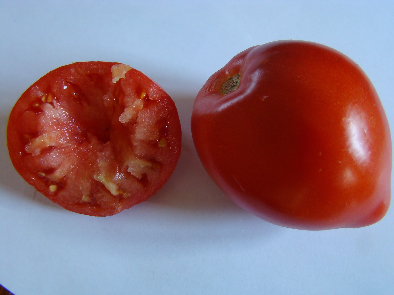 tomate coeur de boeuf troc aux plantes