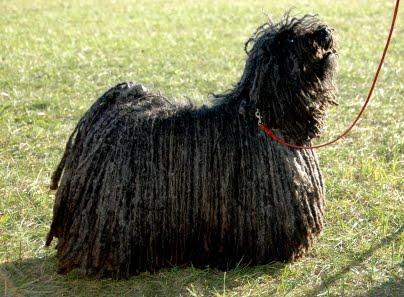 Best of Breed Blog: Mark Zuckerberg 'Likes' Dogs with Dreadlocks