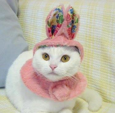 CAT COELHO