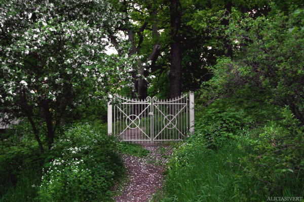 aliciasivert, alicia sivertsson, gate, nature, bloom, flowers, tree, trees, träd, natur, blommor, grind