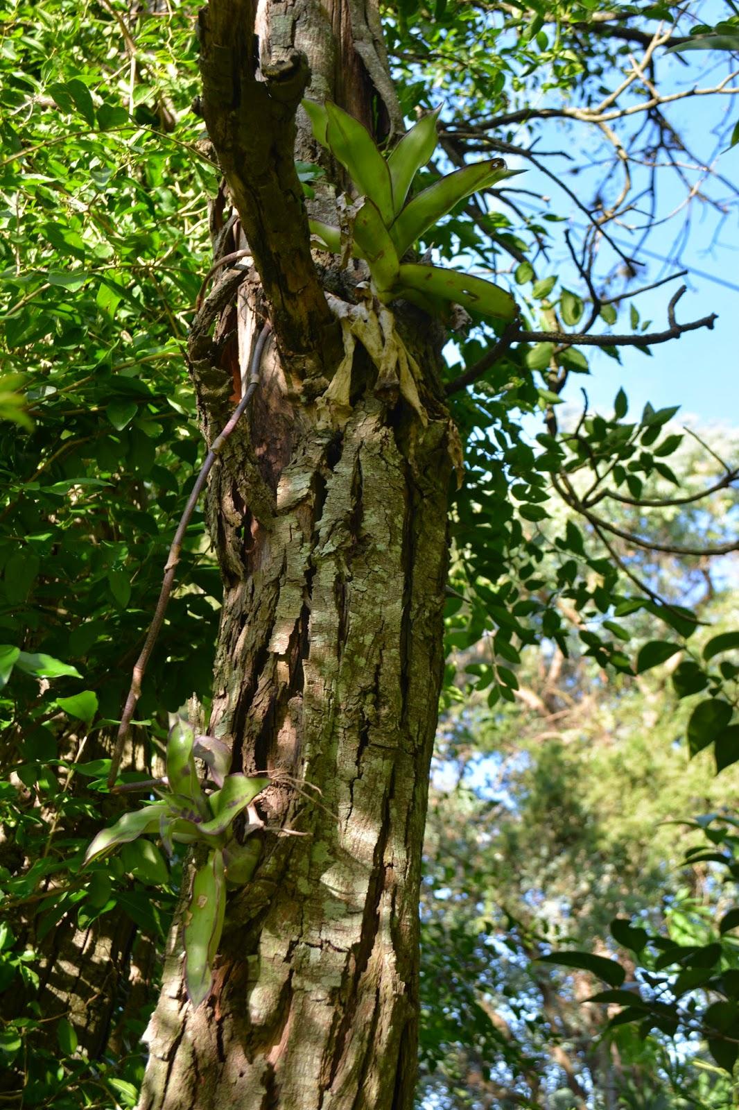 Plantas sobre árboles