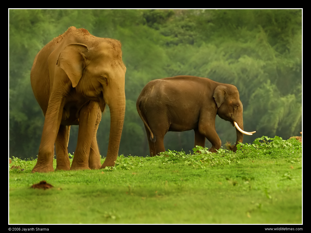 ... gajah sang kuda langsung menyapa kuda halo badak selamat pagi gajah