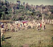 um acampamento de grupo