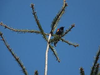 Bird in park