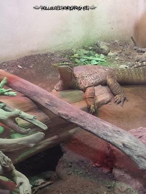 Reptile posé sur un bout de bois à Touroparc
