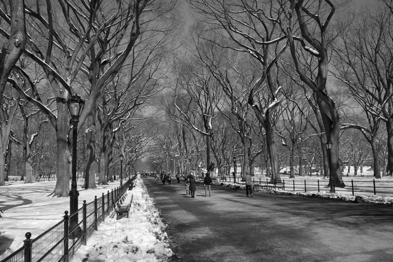 central park winter night central park winter wallpaper central park winter ice skating central park winter background central park winter aerial